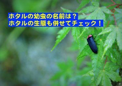 ホタルの幼虫の名前