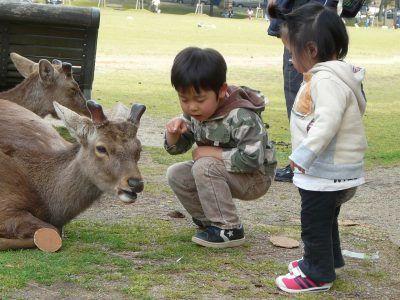 鹿せんべいをあげる子供